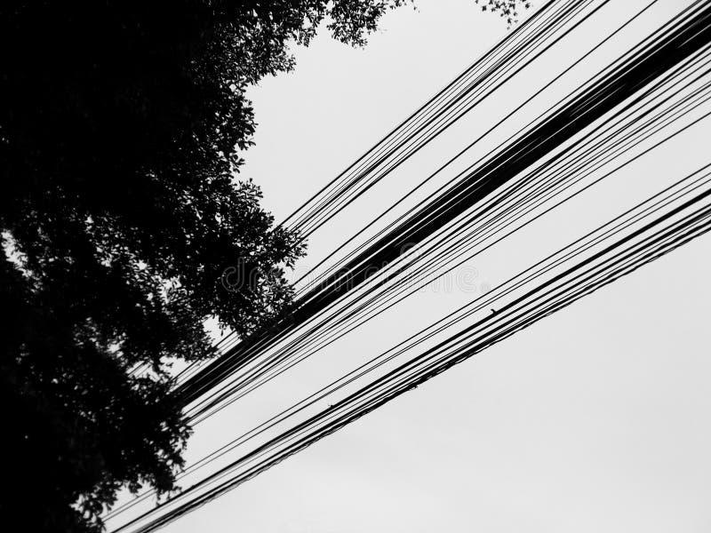 Linhas retas, linhas múltiplas de polos claros e sombras de grandes árvores imagens de stock