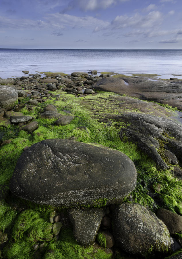 Linia brzegowa wzdłuż Northumberland Cieśniny, Nowa Scotia zdjęcia stock