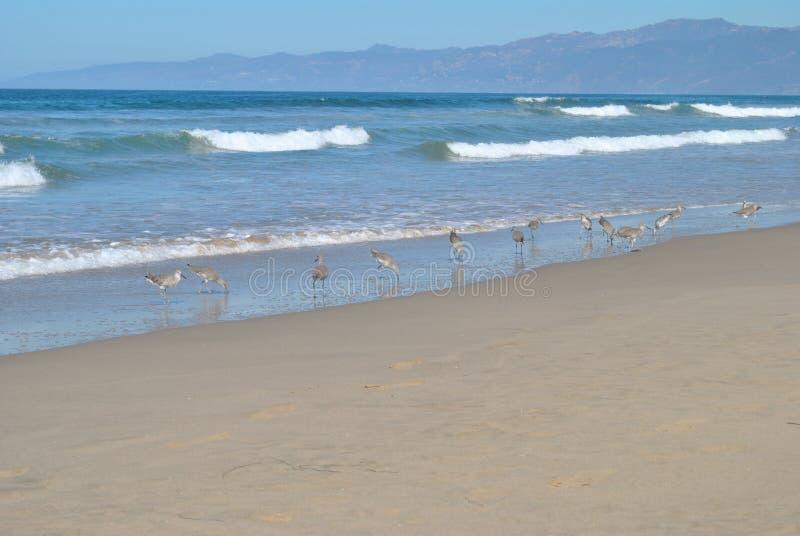 Linia brzegowa z ptakami zdjęcie stock