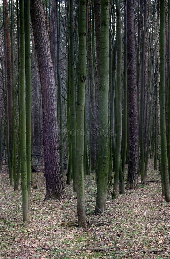 linia drzew zdjęcia royalty free