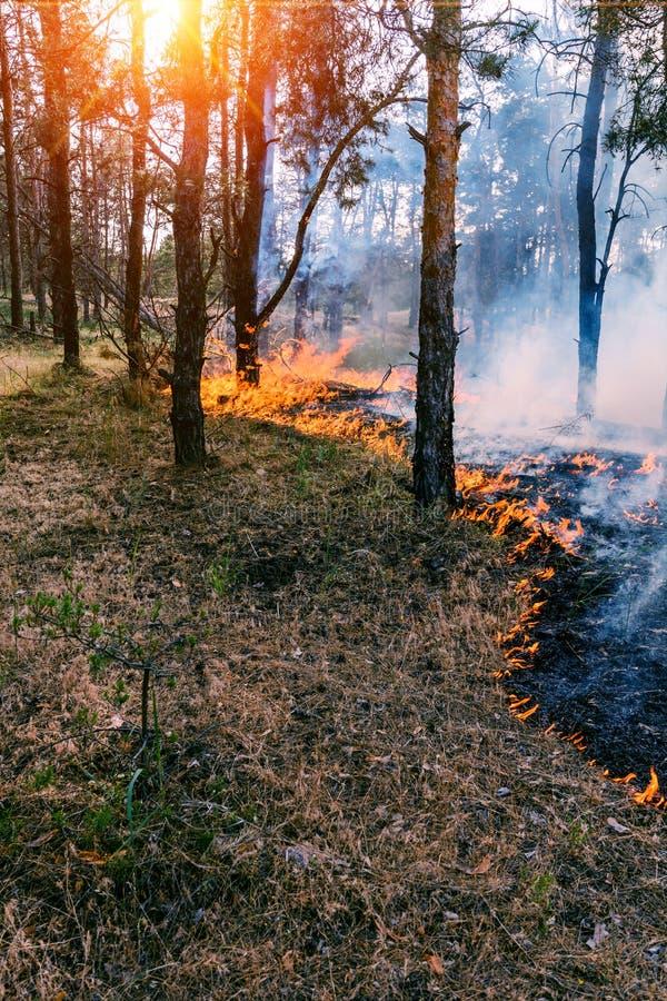Linia frontu podesłanie pożar lasu który oddziela suchej trawy fotografia royalty free