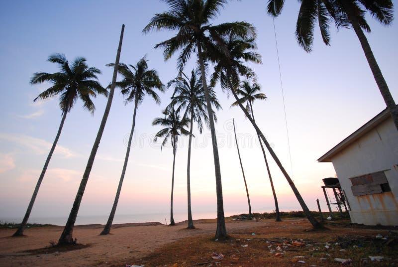 Linia kokosowi drzewa na ranku widoku przy rybak wioską zdjęcia stock