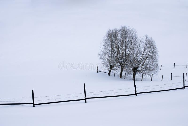 linie śnieg zdjęcia royalty free
