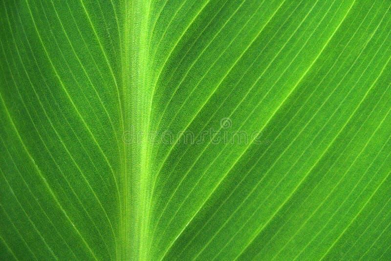Linie deseniu zielonego liścia bliskiego obraz stock