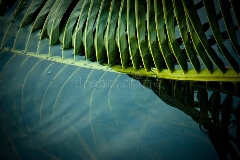 Download Linie und Muster stockfoto. Bild von wald, palme, kokosnuß - 96932396