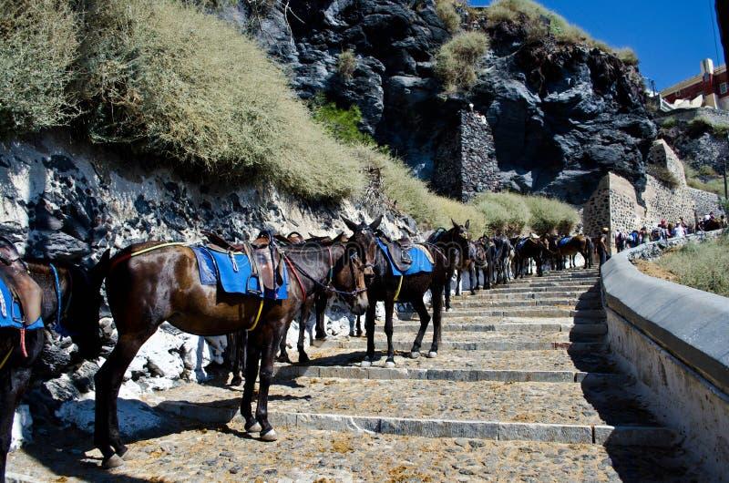 Linie von Eseln in Santorini, Griechenland lizenzfreies stockbild