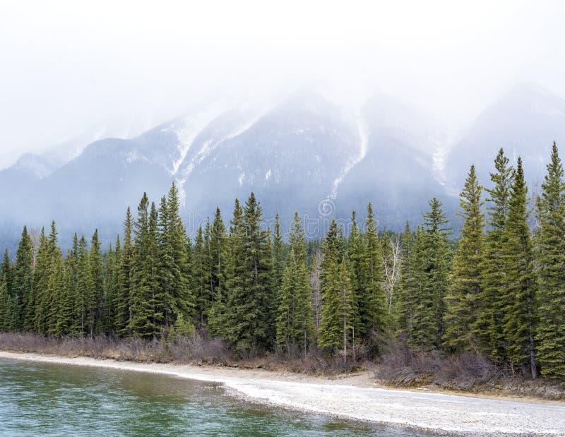 Linie von Kiefern entlang schneebedeckter Flussbank, hohe majestätische Berge im Hintergrund lizenzfreies stockbild