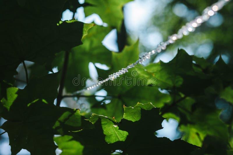 Linie von Kristallperlen hängt im Park lizenzfreie stockfotografie