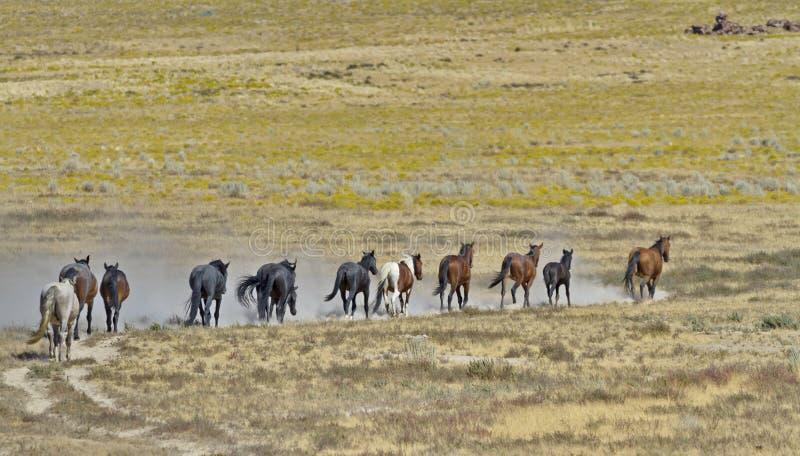 Linie von wilden Pferden rühren oben Sand lizenzfreies stockfoto