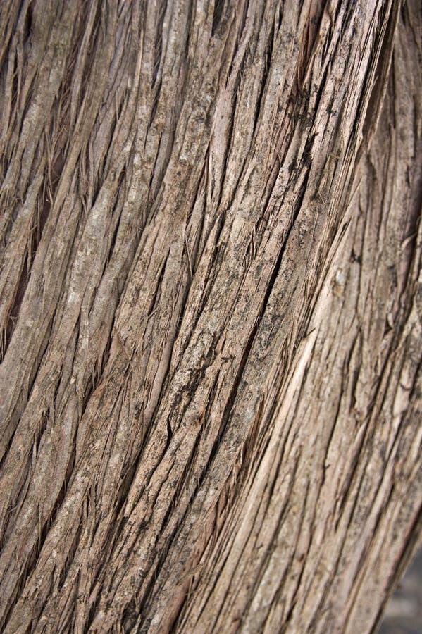 Linien markierten auf der Barke eines alten Baums stockbild