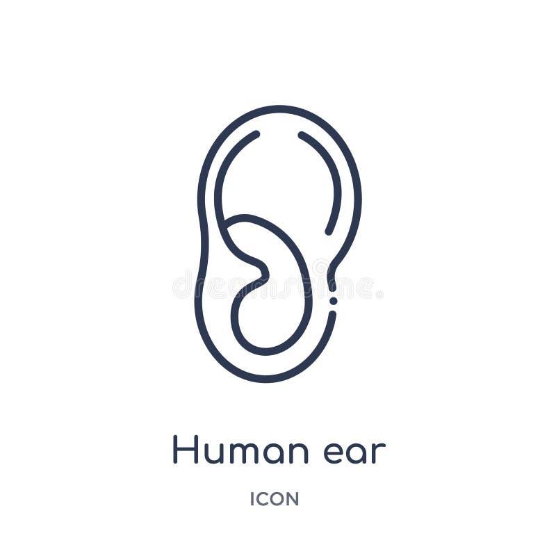 Liniowa ludzka uszata ikona od ciało ludzkie części zarysowywa kolekcję Cienieje kreskową ludzką uszatą ikonę odizolowywającą na  royalty ilustracja
