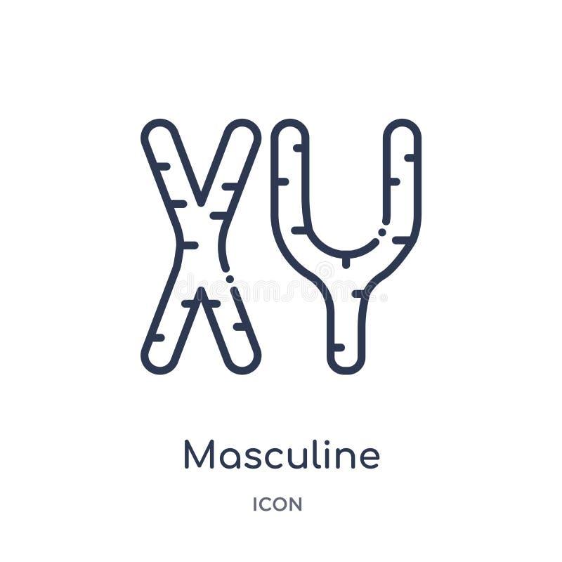 Liniowa męska chromosom ikona od ciało ludzkie części zarysowywa kolekcję Cienieje kreskową męską chromosom ikonę odizolowywającą ilustracja wektor