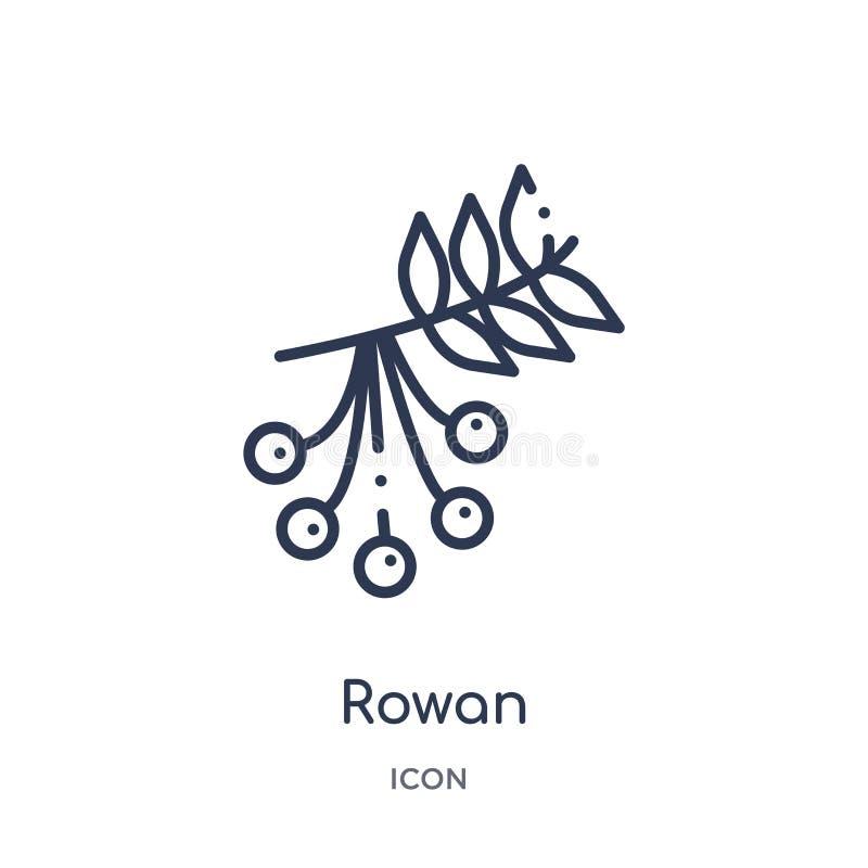 Liniowa rowan ikona od jesień konturu kolekcji Cienieje kreskowego rowan wektor odizolowywającego na białym tle rowan modna ilust ilustracja wektor