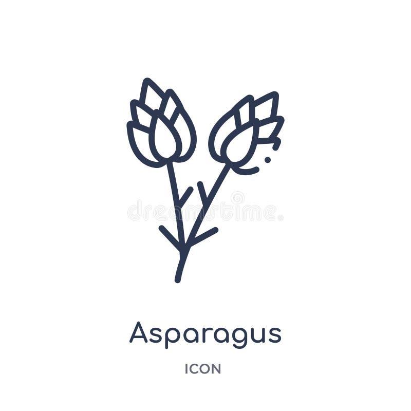 Liniowa szparagowa ikona od owoc konturu kolekcji Cienieje kreskową szparagową ikonę odizolowywającą na białym tle asparagus modn ilustracja wektor