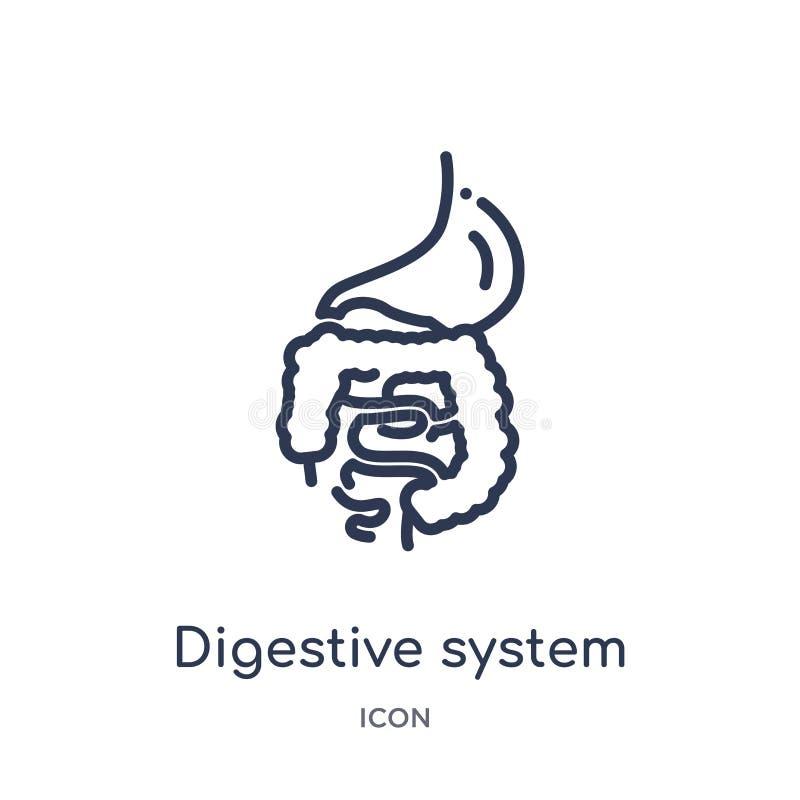 Liniowa trawiennego systemu ikona od ciało ludzkie części zarysowywa kolekcję Cienieje kreskową trawiennego systemu ikonę odizolo ilustracji