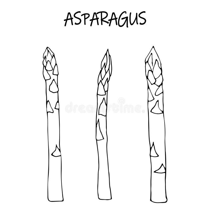Liniowego nakreślenia surowy asparagus ilustracji