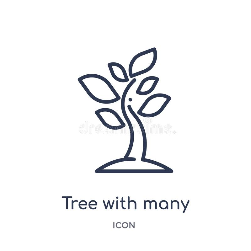 Liniowy drzewo z dużo opuszcza ikonę od ekologia konturu kolekcji Cienieje kreskowego drzewa z wiele liści wektorem odizolowywają ilustracja wektor