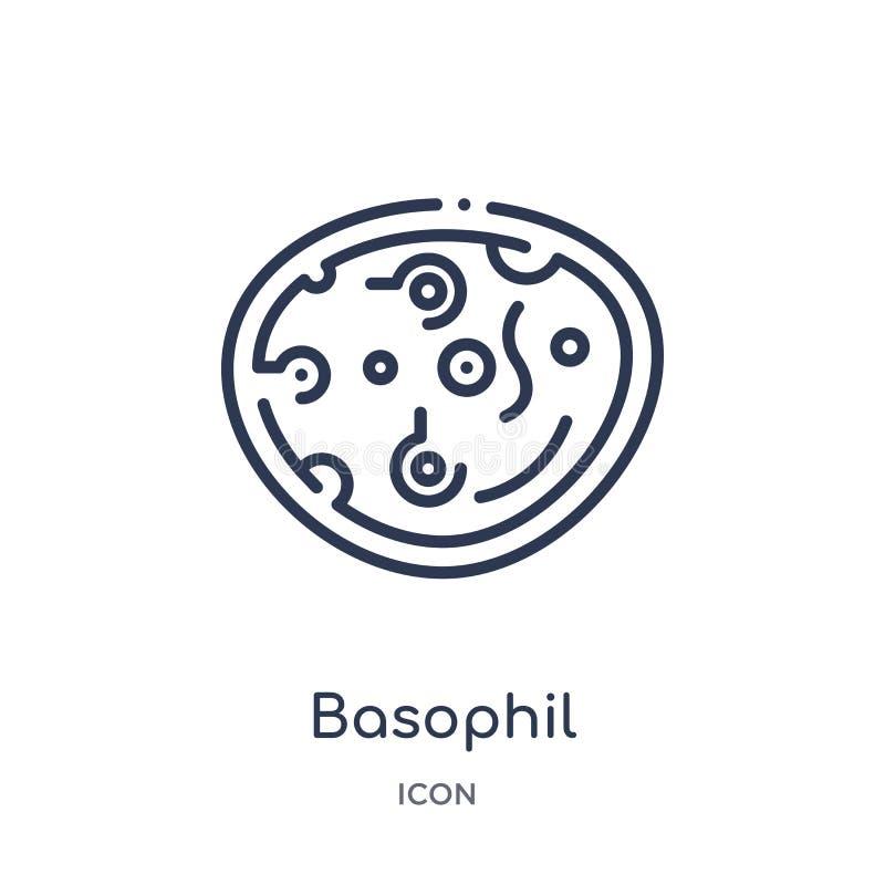 Linjär basophilsymbol från samling för översikt för människokroppdelar Tunn linje basophilsymbol som isoleras på vit bakgrund Bas royaltyfri illustrationer