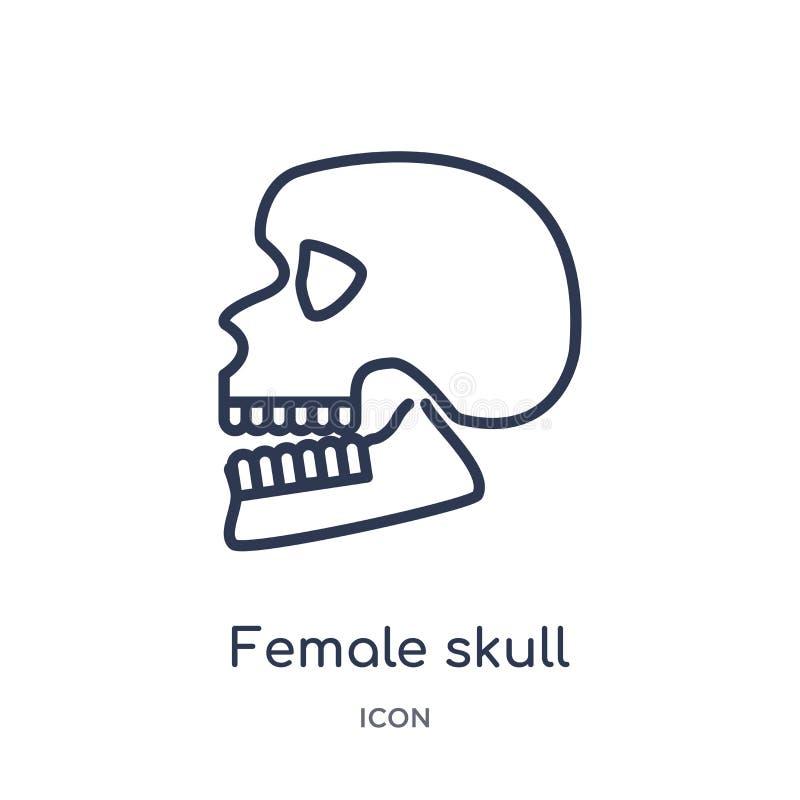 Linjär kvinnlig skallesymbol från samling för allmän översikt Tunn linje kvinnlig skallesymbol som isoleras på vit bakgrund Kvinn stock illustrationer