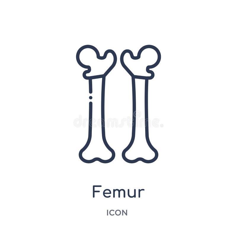 Linjär lårbensymbol från medicinsk översiktssamling Tunn linje lårbensymbol som isoleras på vit bakgrund moderiktig illustration  royaltyfri illustrationer
