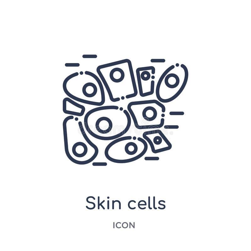 Linjär symbol för hudceller från samling för översikt för människokroppdelar Tunn linje symbol för hudceller som isoleras på vit  royaltyfri illustrationer