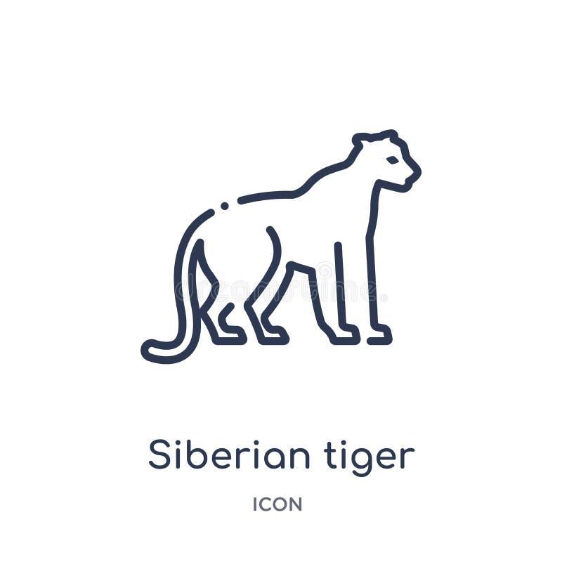 Linjär symbol för siberian tiger från djur och djurlivöversiktssamling Tunn linje vektor för siberian tiger som isoleras på vit royaltyfri illustrationer