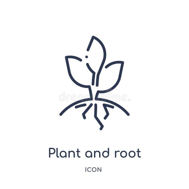 Linjär växt och att rota symbolen från ekologiöversiktssamling Den tunna linjen växt och rotar vektorn som isoleras på vit bakgru stock illustrationer