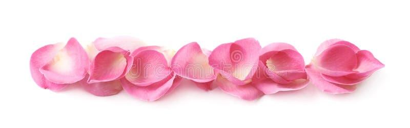 Linje av rosa färgroskronblad royaltyfri fotografi