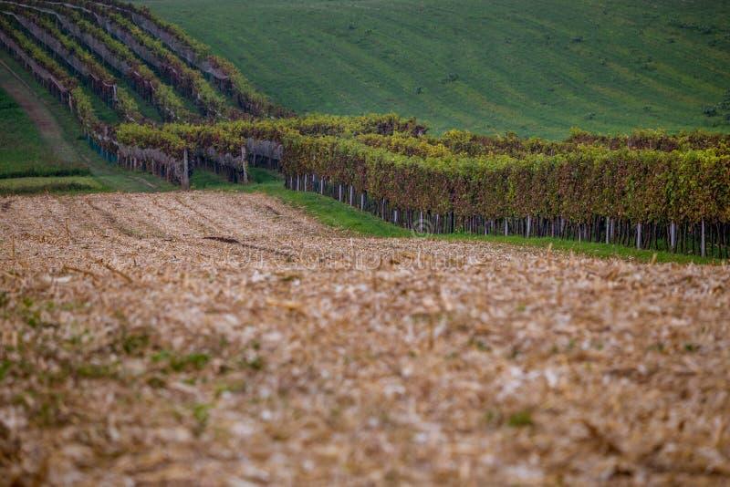 Linje av skördade fält och vingårdar i Moravia royaltyfri foto