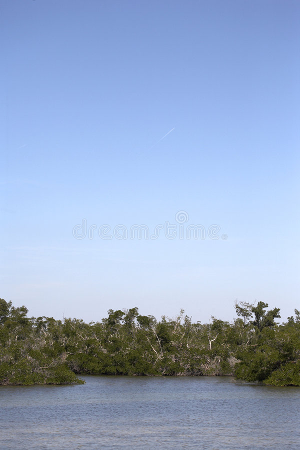 linje mangroveswamptree arkivfoto