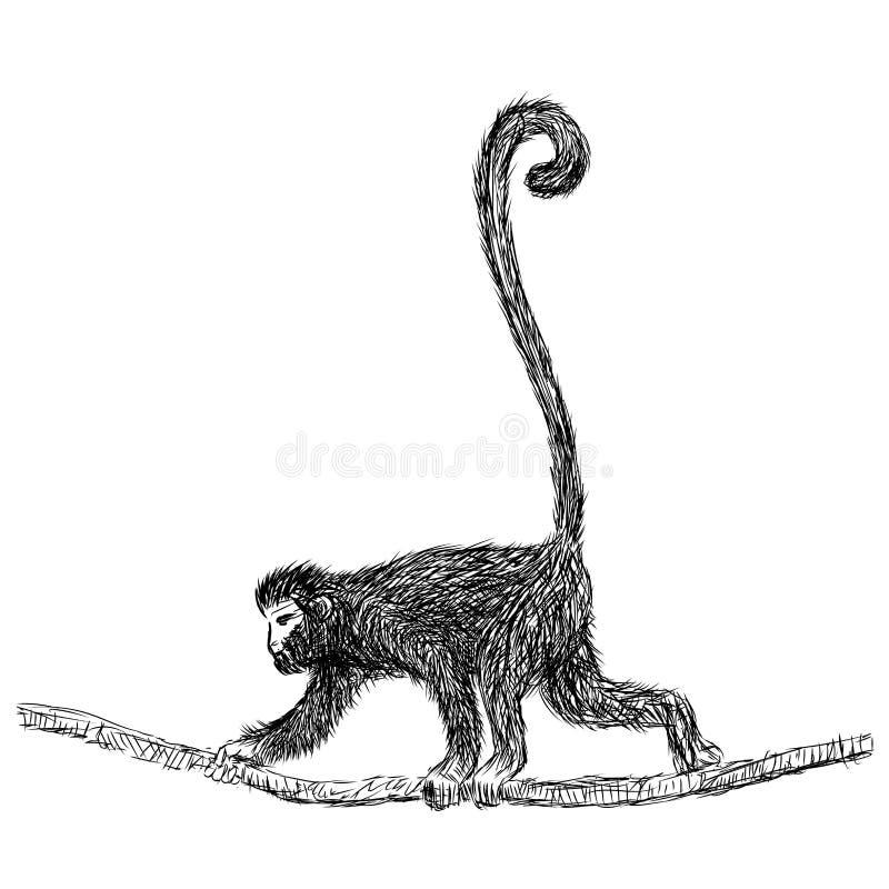 Linje teckning av Gibbon - vektorillustration royaltyfri illustrationer
