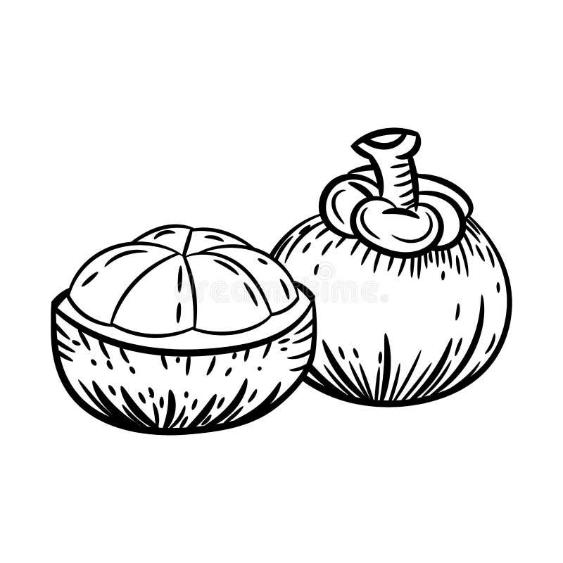 Linje teckning av mangosteenen - enkel linje vektor royaltyfri illustrationer