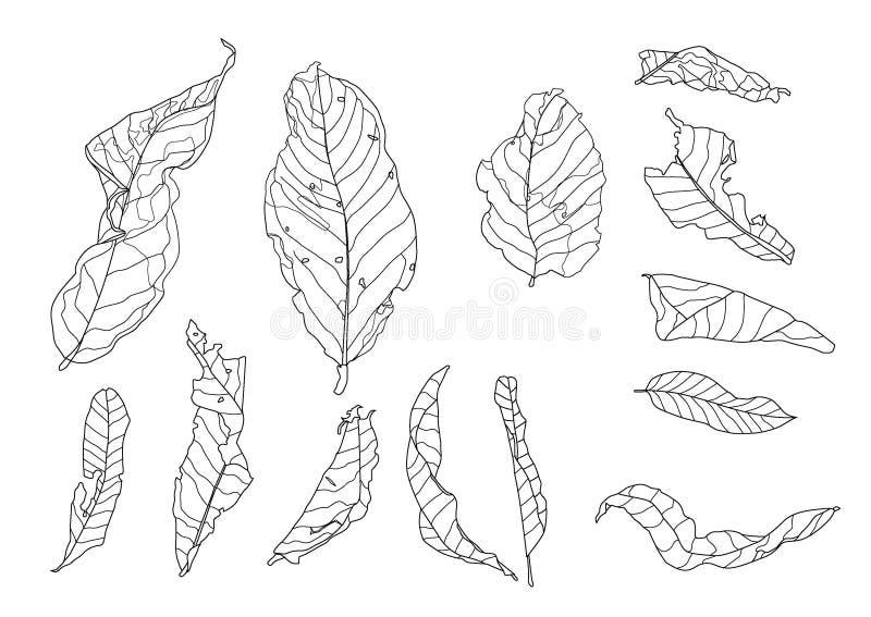 Linje torrt blad på den vita bakgrundsillustrationvektorn royaltyfri illustrationer