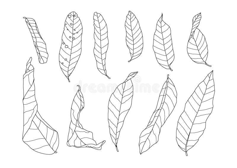 Linje torrt blad på vit bakgrund royaltyfri illustrationer