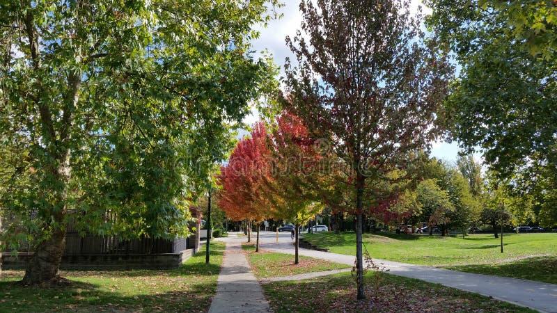 linje trees royaltyfria foton