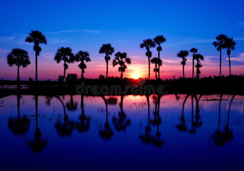 Linjen av palmträd i soluppgången arkivbilder