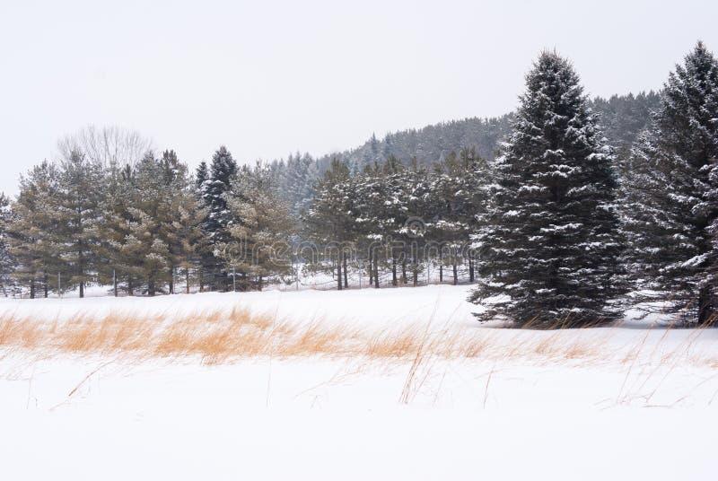 Linjen av snö som täcktes för att sörja träd med en linje av kulört gräs för rost i snön, täckte förgrund arkivfoton