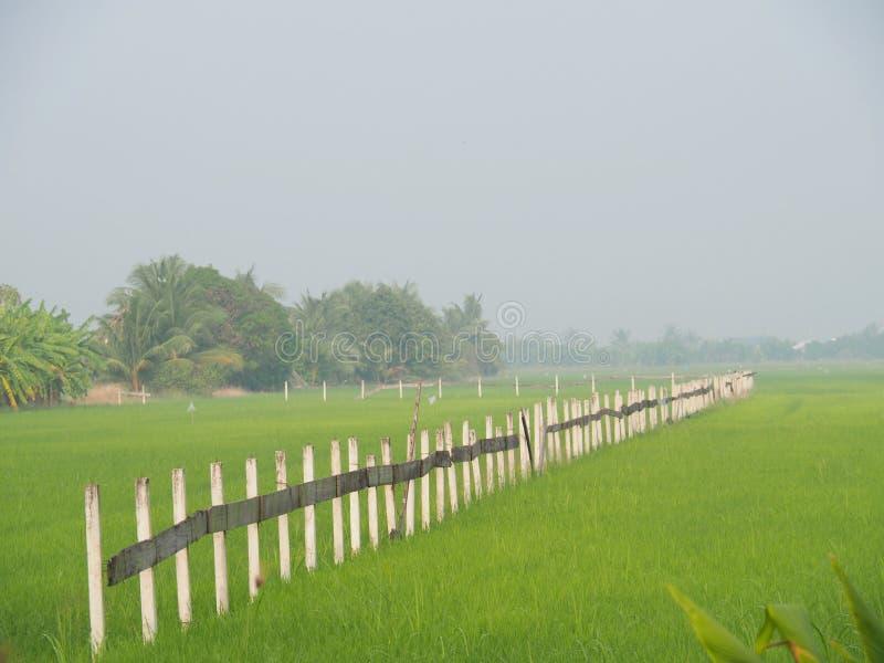 Linjen av staketet i risfältet på thailändsk bygd, morgonljusdimma med begreppet av lantligt liv, natur, enkelhet, referens arkivfoto