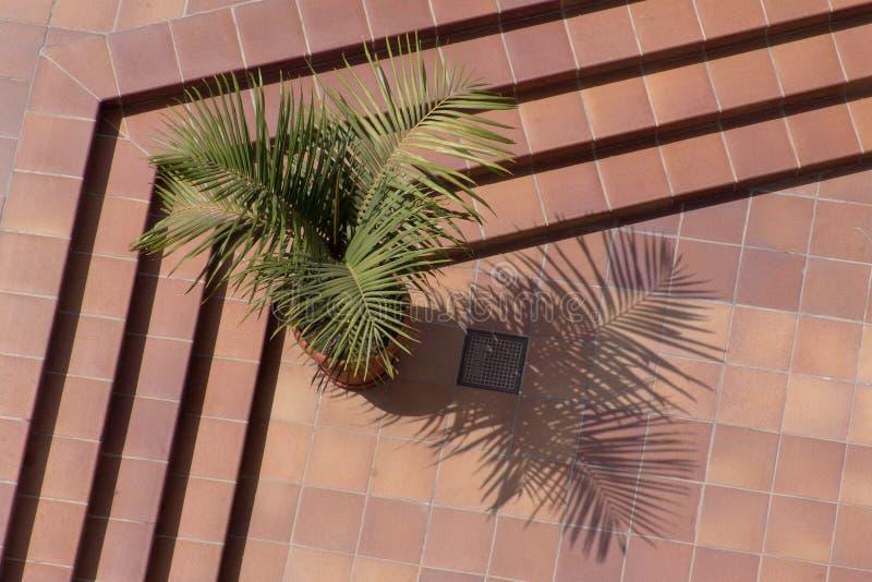 Download Linjer fotografering för bildbyråer. Bild av tree, skuggor - 228831