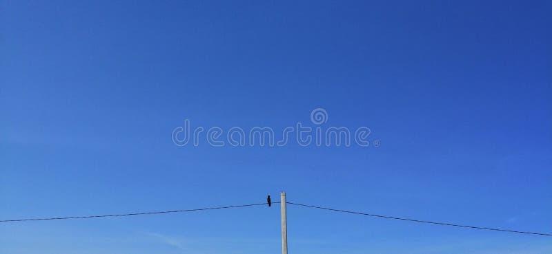 Linjer för blå himmel av det elektriska kugghjulet på dem sitter avianaubor royaltyfria bilder
