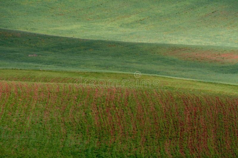 Linjerna av gröna kullar skapar härliga modeller som vågor Delvist upplyst vid solen Härlig bakgrund royaltyfri foto