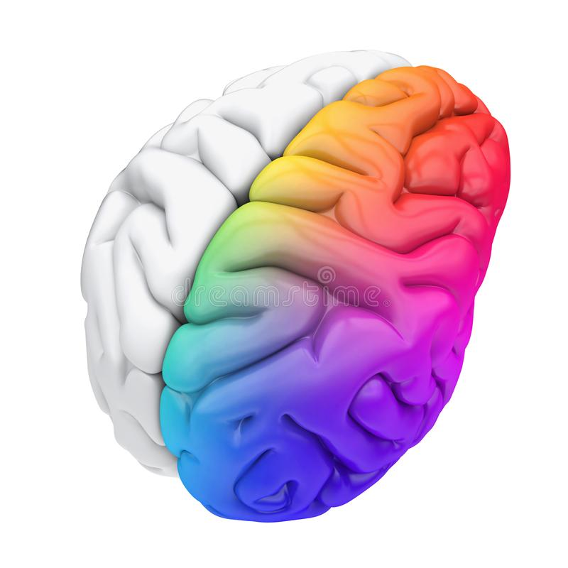 Linker en Juist Menselijk Brain Anatomy Isolated royalty-vrije illustratie