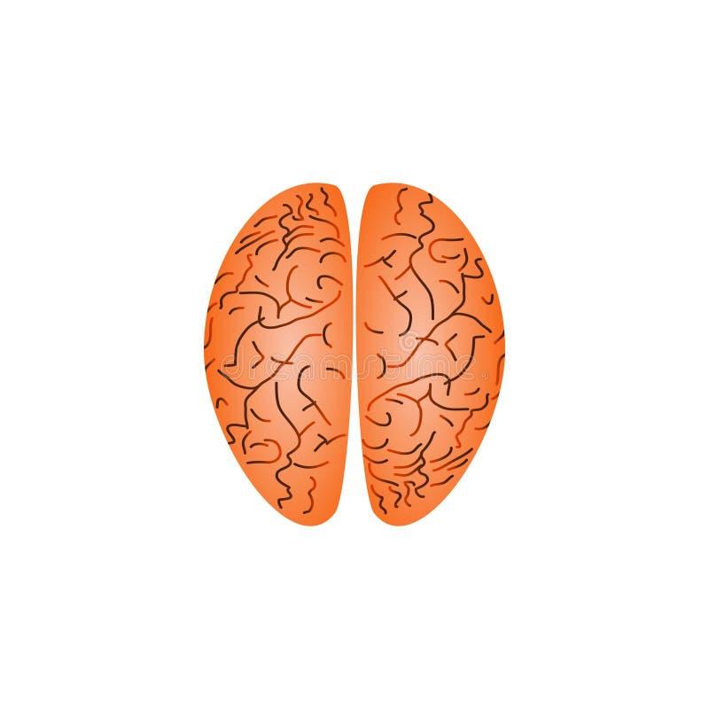 Linker en juiste hemisfeer vector illustratie