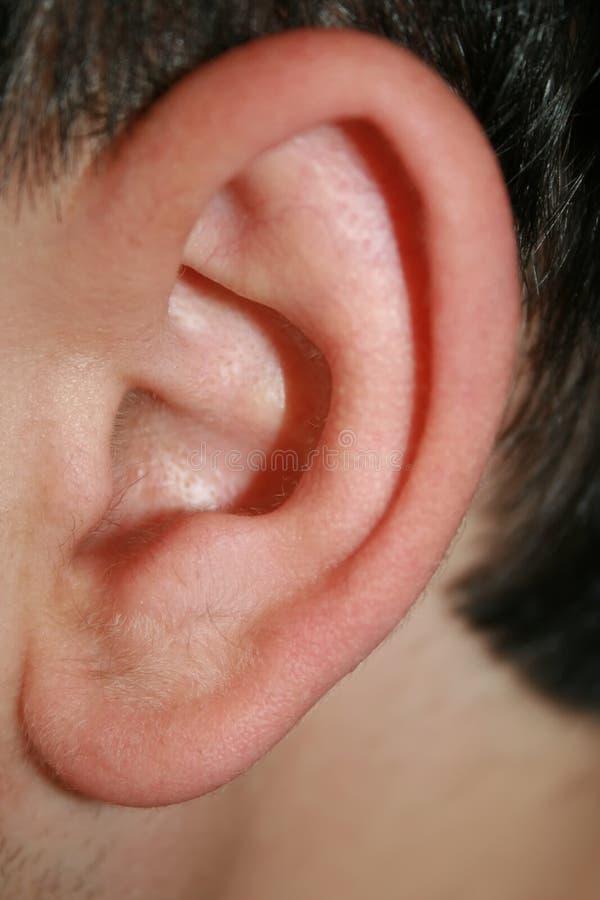 Linker oorclose-up royalty-vrije stock foto