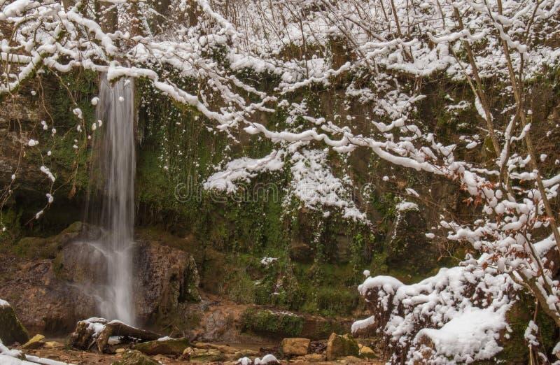 Linn瀑布在积雪的森林里在冬天 采取在Linn附近,瑞士,阿尔高州小行政区的  库存照片