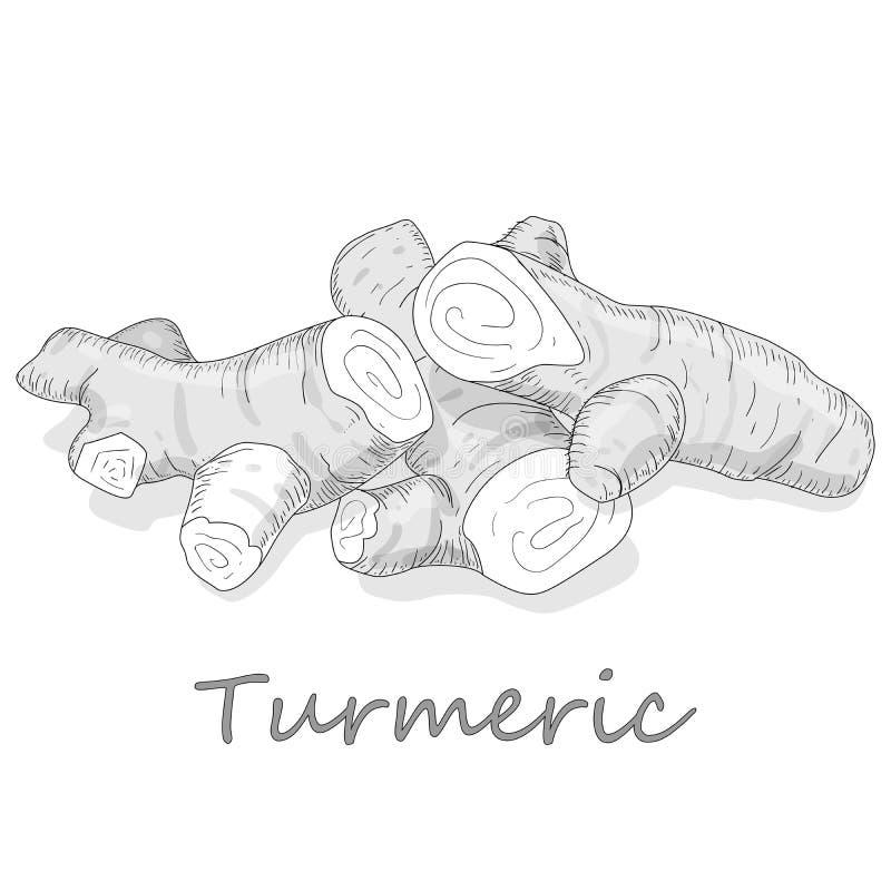 Linn för gurkmejaCurcumalonga pulver och att rota på den vita bakgrundsvektorillustrationen stock illustrationer