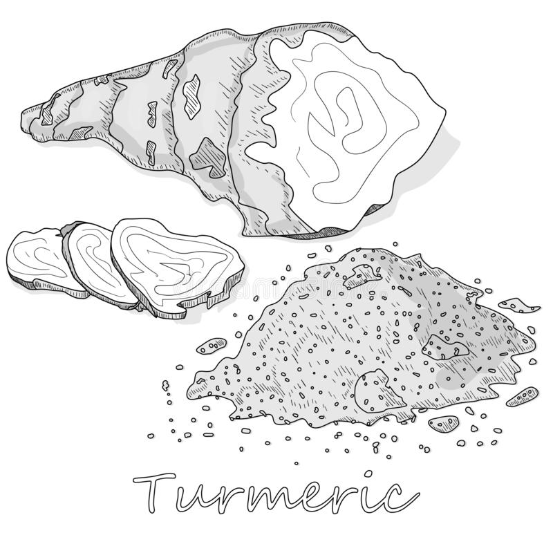 Linn för gurkmejaCurcumalonga pulver och att rota på den vita bakgrundsvektorillustrationen vektor illustrationer