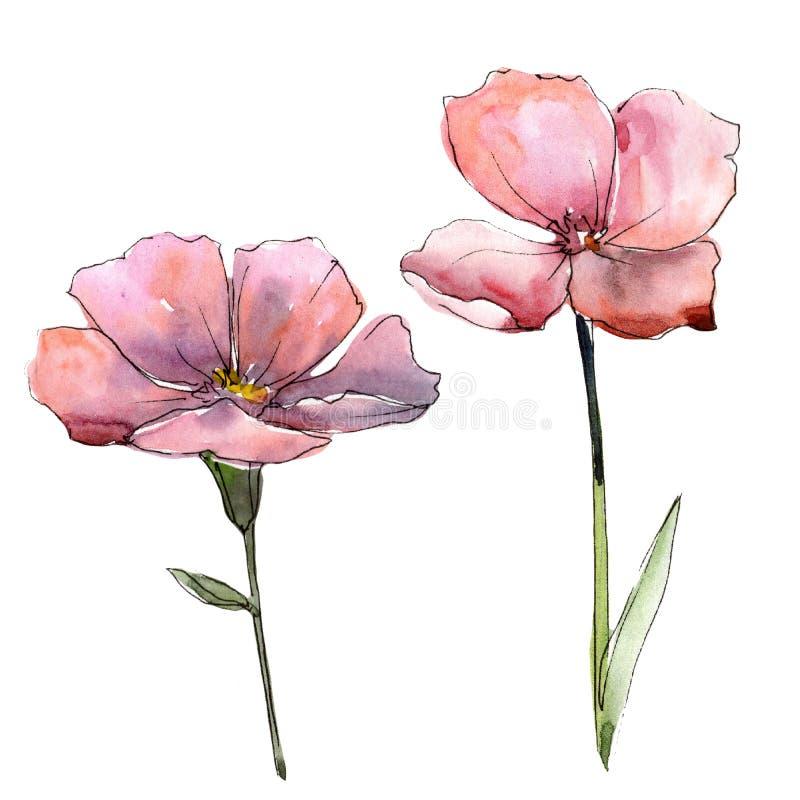 Lino rosa del Wildflower Fiore botanico floreale Elemento isolato dell'illustrazione royalty illustrazione gratis