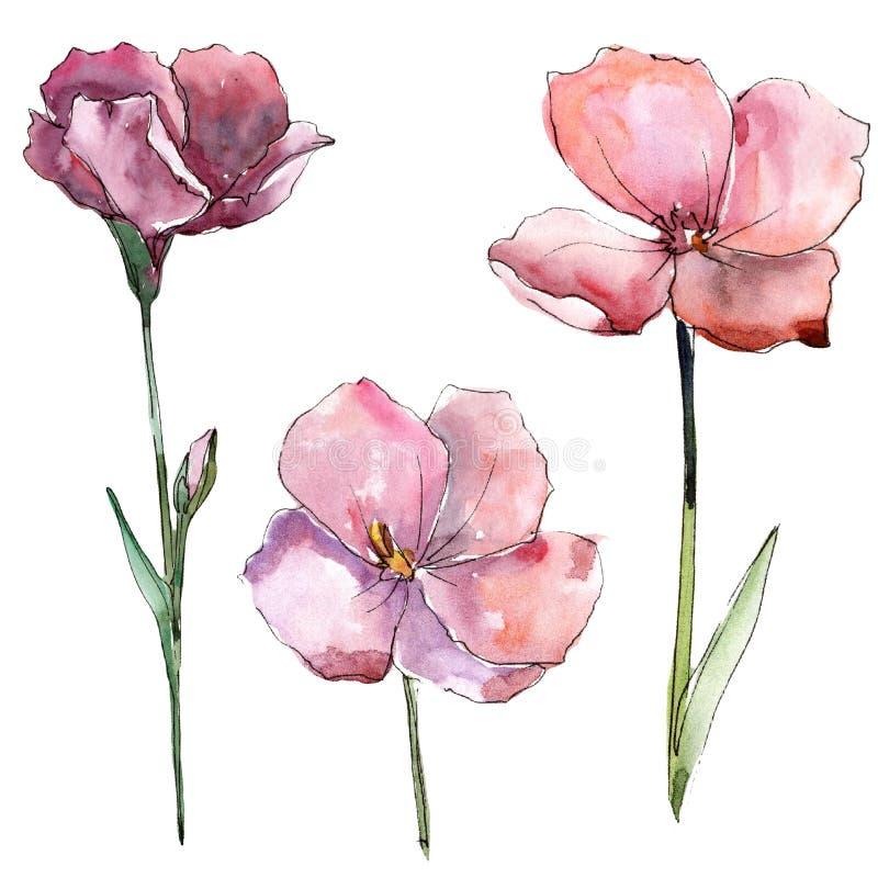 Lino rosa del Wildflower Fiore botanico floreale Elemento isolato dell'illustrazione illustrazione di stock