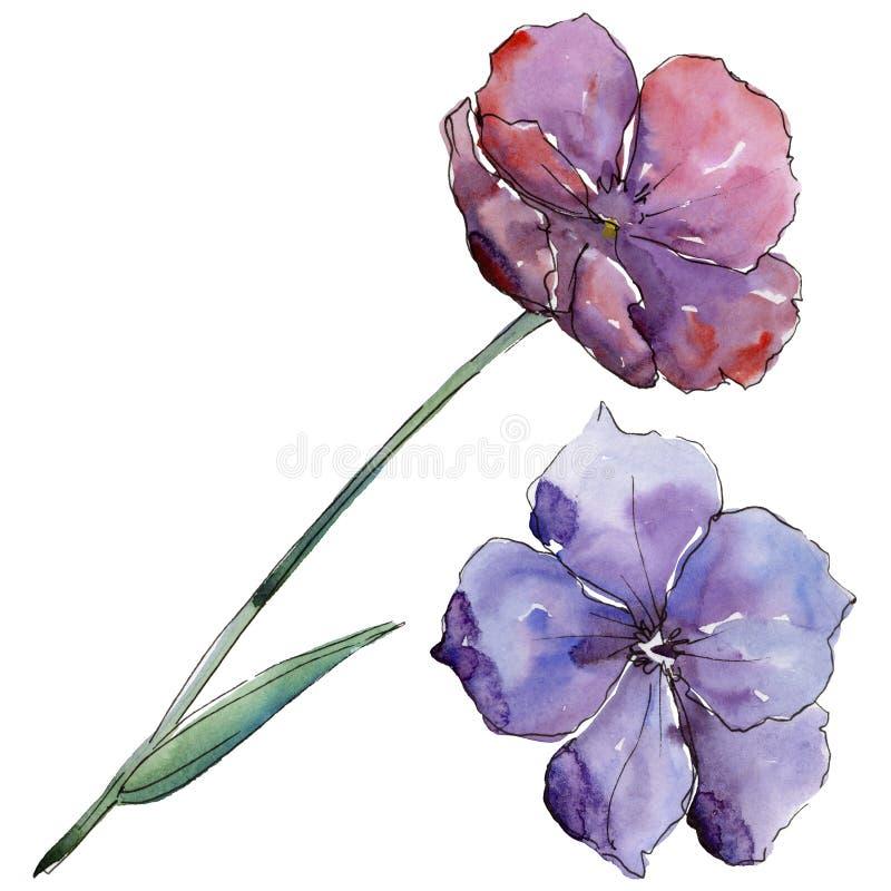 Lino variopinto Fiore botanico floreale Wildflower selvatico della foglia della molla isolato royalty illustrazione gratis